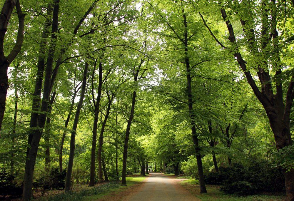 Parque Tiegarten