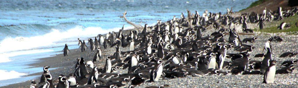 panoramica pinguinera ushuaia 2