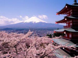 Japón en primavera cerezo flor