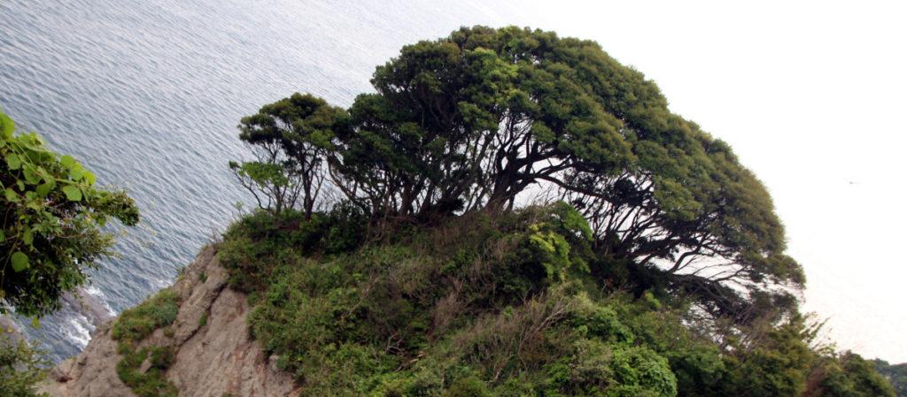 vistas bahia Enoshima