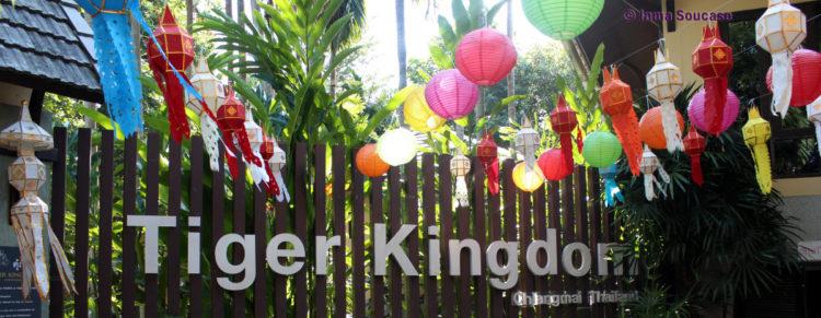 Tiger Kingdom, Chiang Mai - entrada