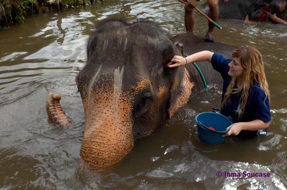 Baan Chang Elephant park - limpiando al elefante