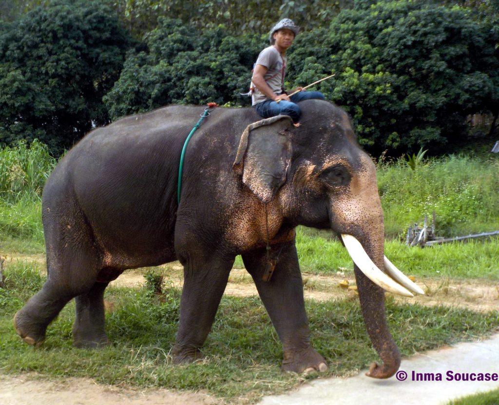 Baan Chang Elephant park - Mahout