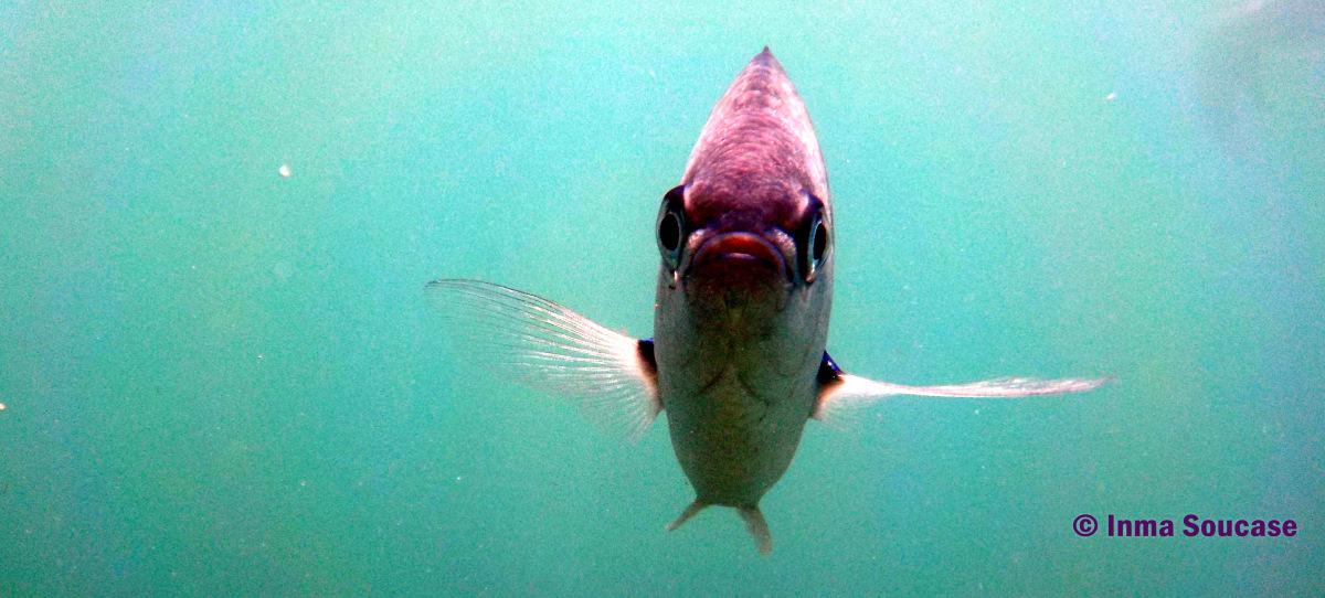 Isla Hong, pez