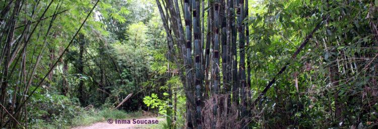 parque nacional Khao sok - camino trekking jungla 2
