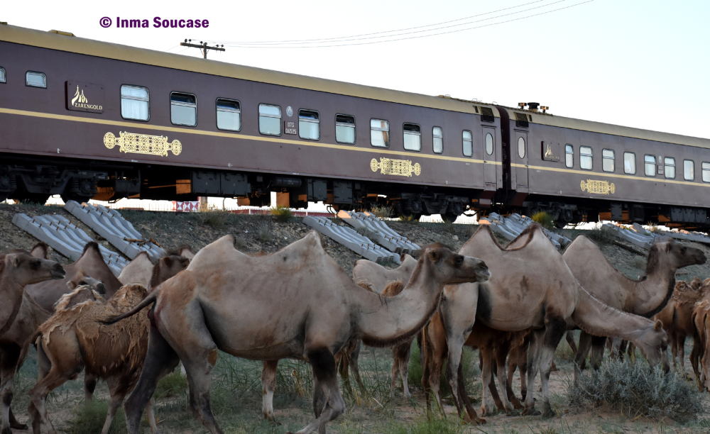 desierto-gobi-camellos-transmongoliano-zarengold-mongolia