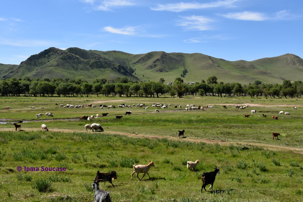 estepa-y-cabras-mongolia