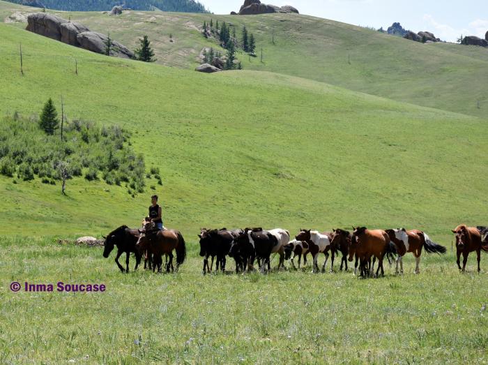 naadam-caballos-parque-nacional-gorkhi-terelj-mongolia