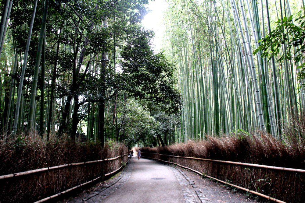 bosque-de-bambu-arashiyama