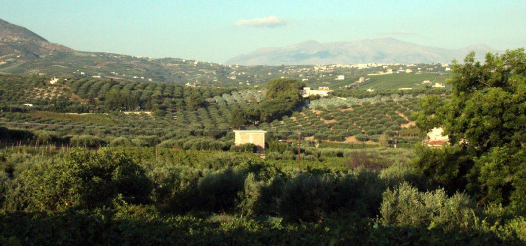 panoramica Creta, olivos