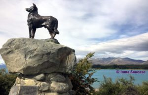 perro collie - lago Tekapo