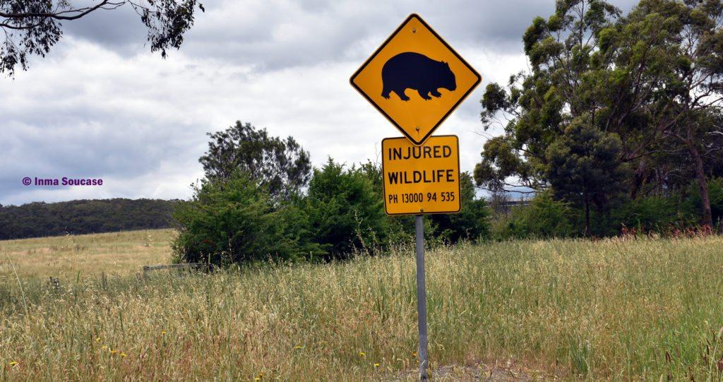 señal trafico wombat Australia