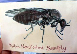 dibujo sandfly