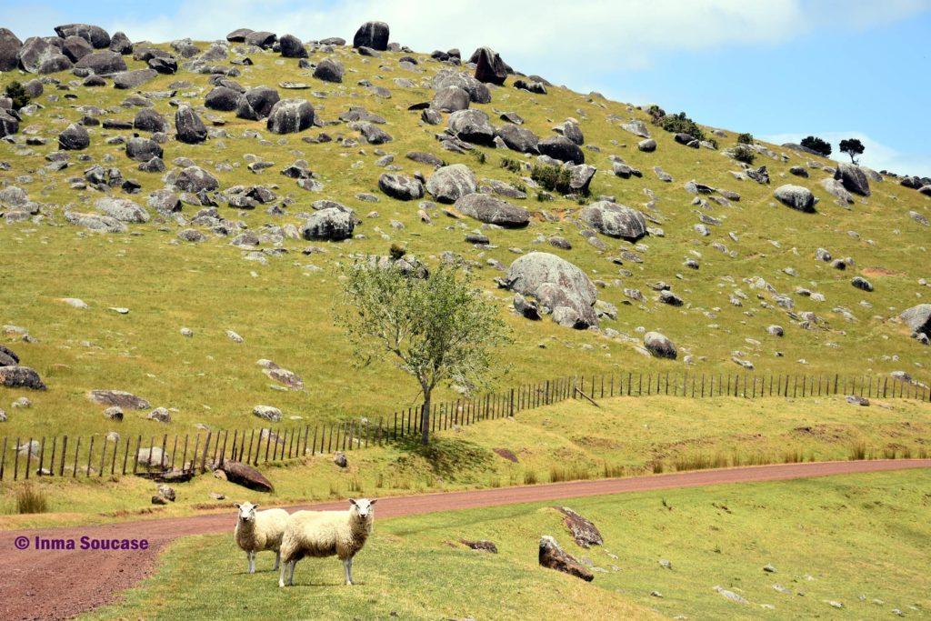 isla-Waiheke-piedras