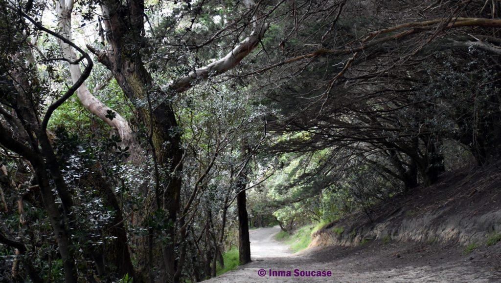 salid camino Monte Victoria